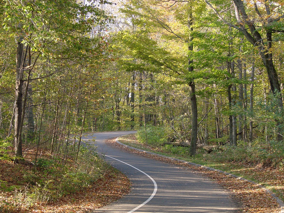Winding Road, Forest, Path, Road, Travel, Curve, Rural