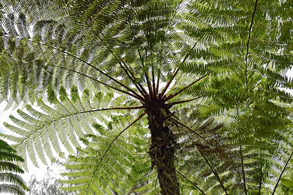 Bali, Indonesia, Travel, Nature, Botany
