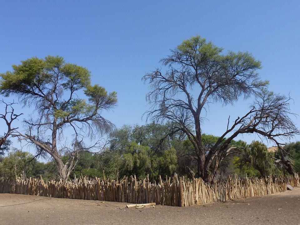 Landscape, Trees, Namibia, Travel