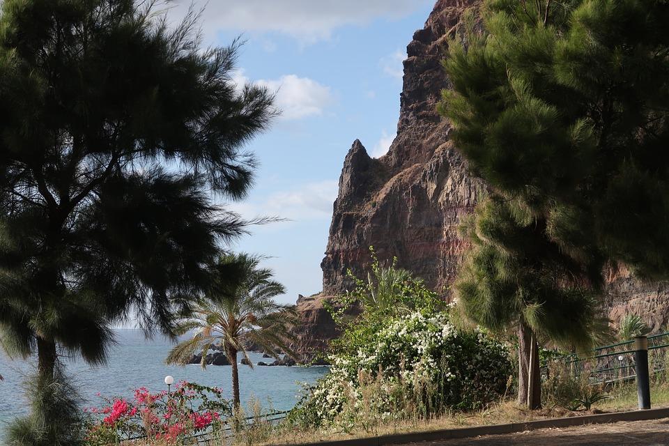 Madeira, Tree, Nature, Travel, Outdoors, Sky