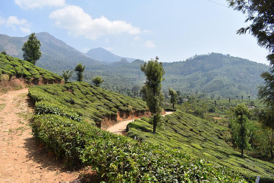 Munnar, Kerala, India, Asia, Travel, Nature, Scenery