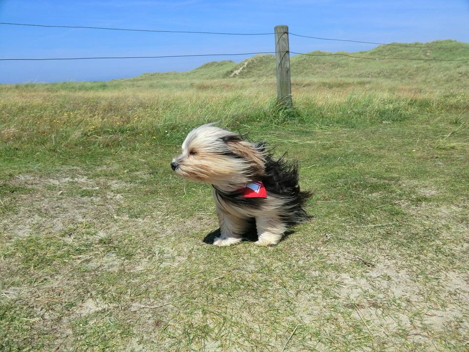 Dog, Wind, Animal, Cute, Pet, Outdoor, Summer, Travel