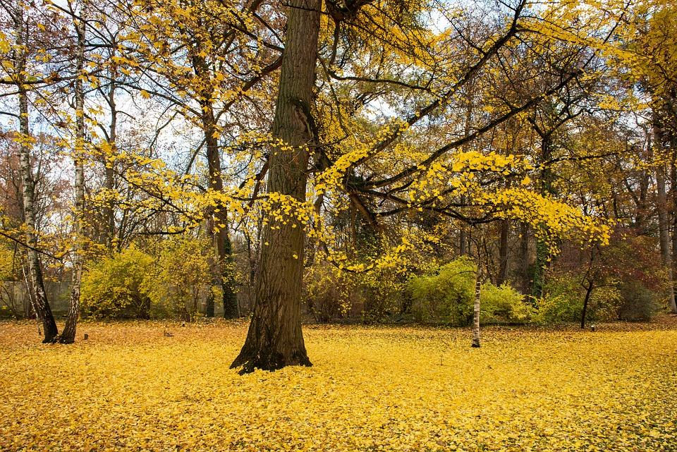 Palace, Autumn, Leaves, Building, Park, Travel