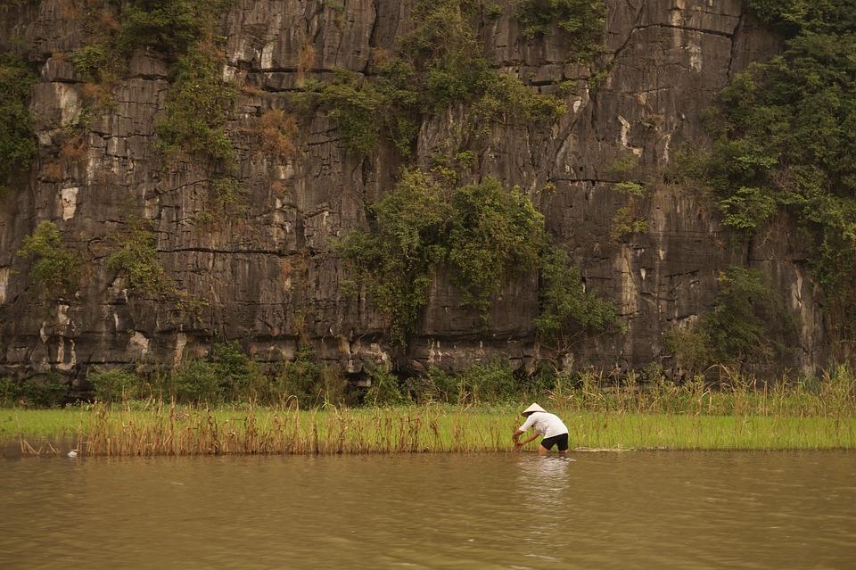 Vietnam, Rice, Rice Field, Rice Fields, Man, Travel
