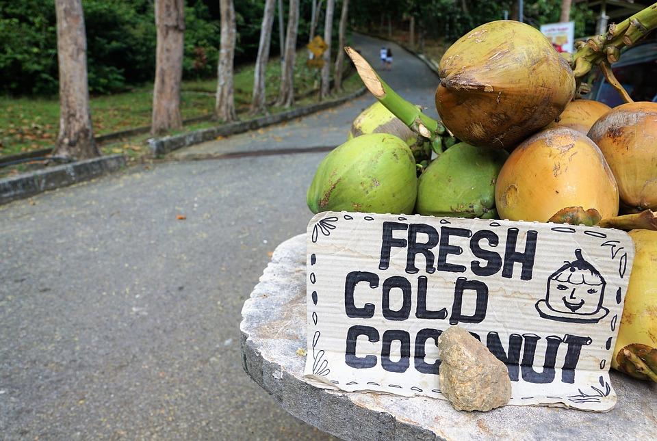 Food, Road, Nature, Summer, Environment, Travel