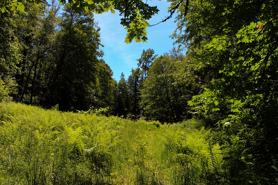 Field, Mountain, Grass, Landscape, Nature, Sky, Travel