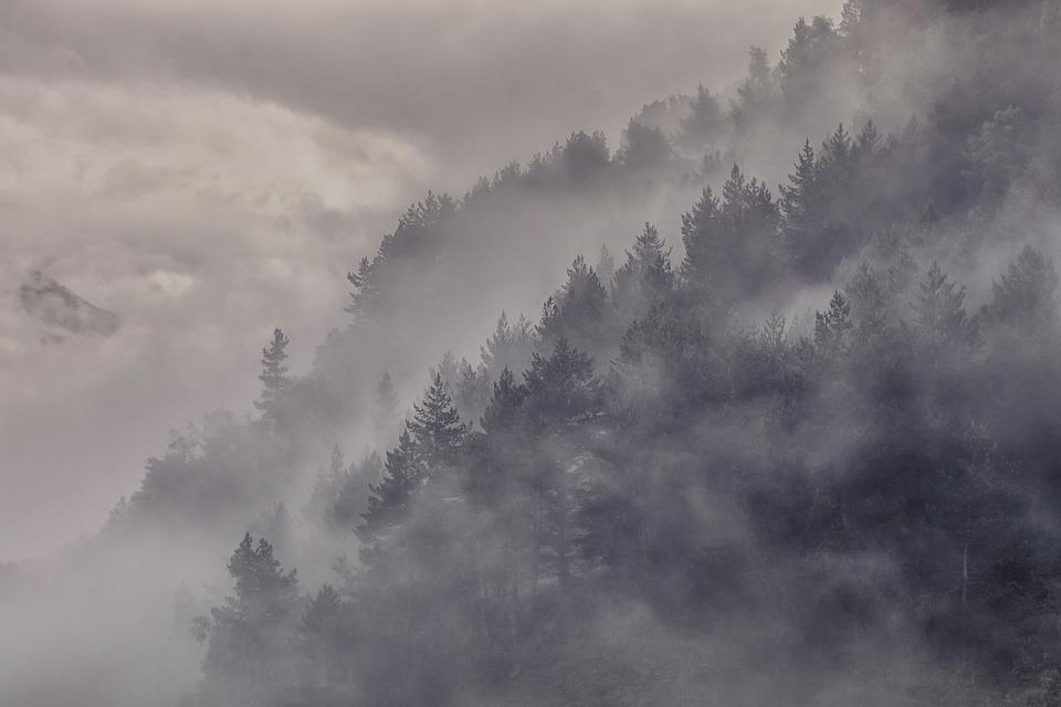 Fog, Forest, Trees, Evening, Camping, Travel, Summer