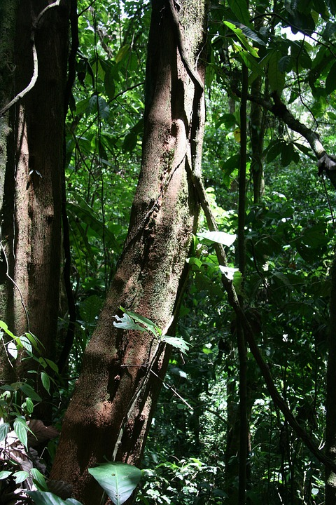 Trees, Costa Rica, Rain Forest, Forest, Travel, Jungle