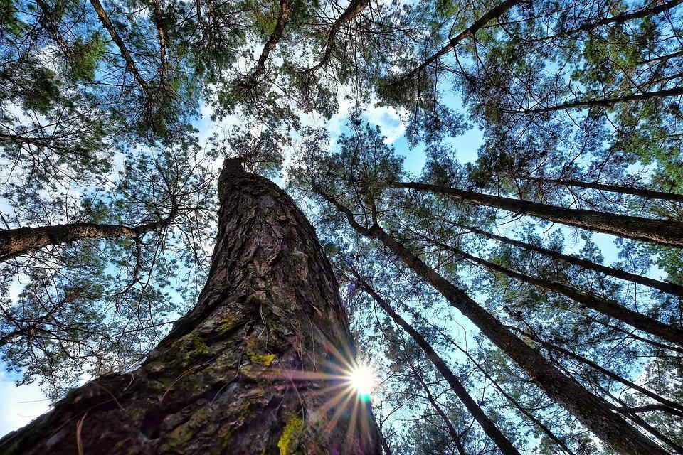 Forest, Nature, Lanscapes, Travel, Vietnam