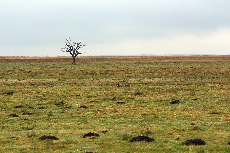 A Single Tree Standing, Tree, Solitary, Nature