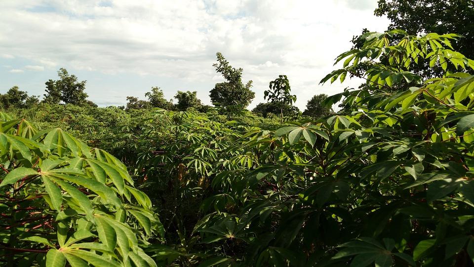 Agriculture, Nature, Flora, Leaf, Tree
