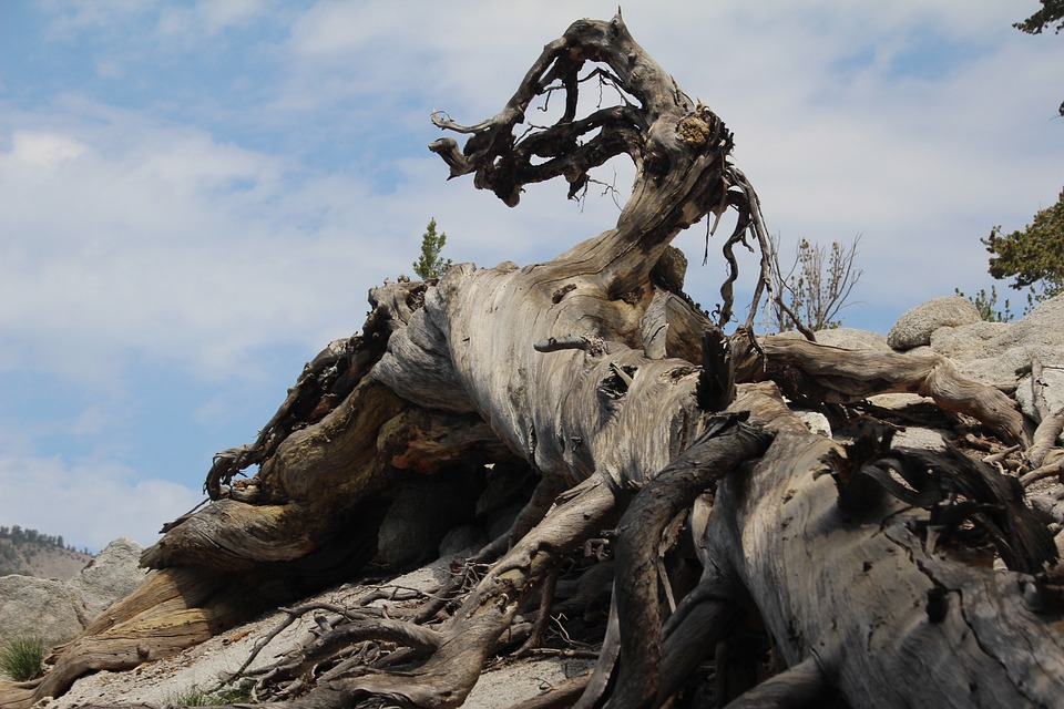 Twisted, Wood, Mountain, Tree, Organic, Agriculture