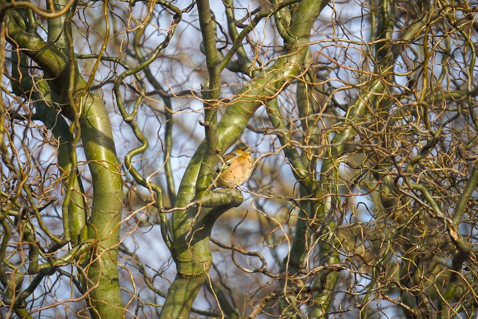 Bird, Tree, Sun, Nature, Animal