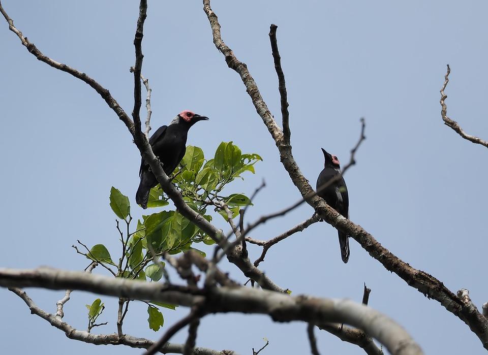 Bird, Wildlife, Tree, Nature, Animal, Outdoors, Wild