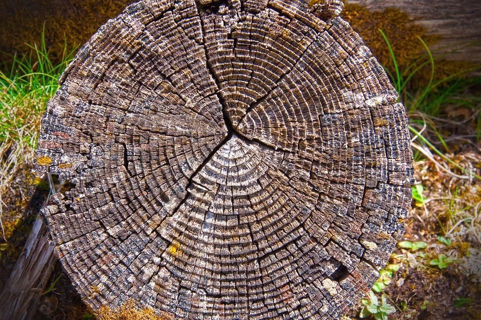 Wood, Annual Rings, Tribe, Log, Tree, Grain, Background