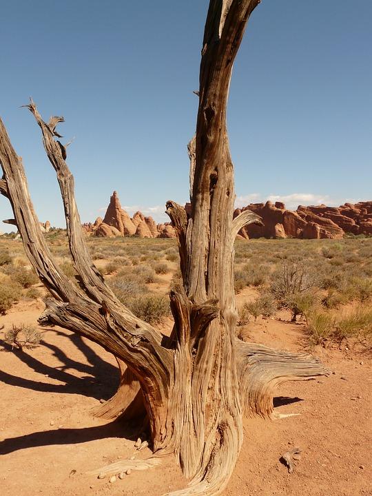 Tree, Branch, Wood, Dry, Desert, Utah, Usa, Sand, Arid