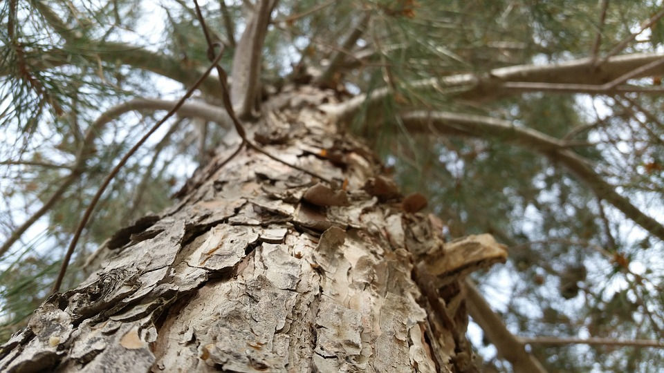 Tree, Arm, Theme