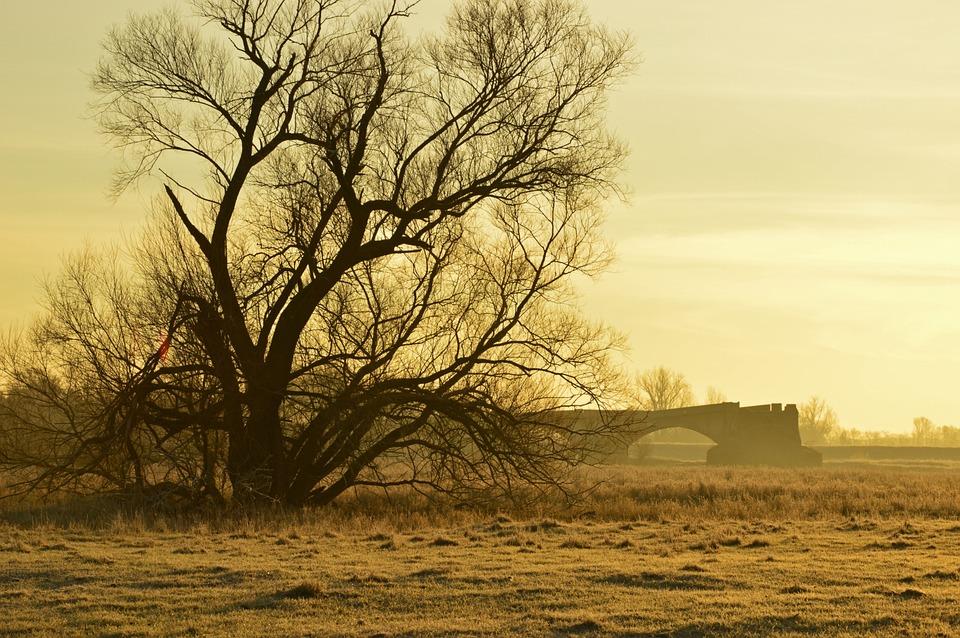 Morgenstimmung, Tree, Aue, Meadow, Fog, Sunrise, Nature