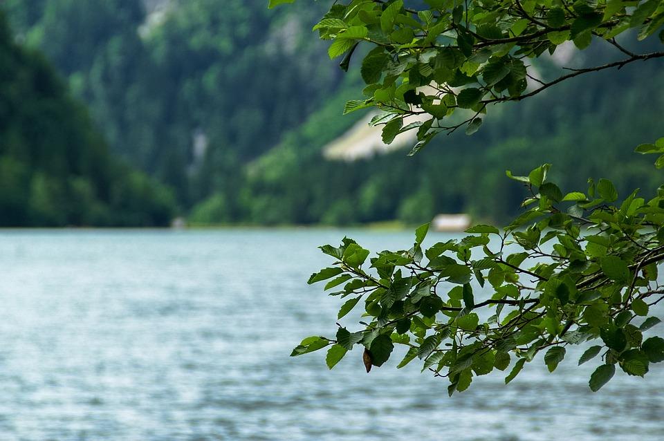 Lake, Tree, Leaves, Austria, Branches, Blatter, Summer