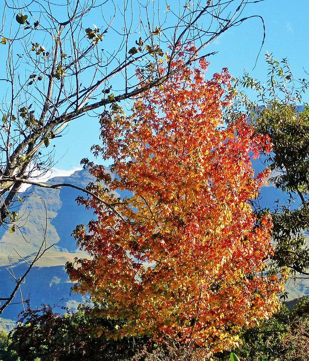 Autumn, Tree, Leaves, Foliage, Burnished, Season