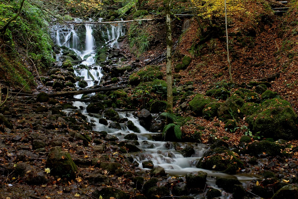 Bolu, Seven Lakes, Landscape, Autumn, Dry Leaves, Tree