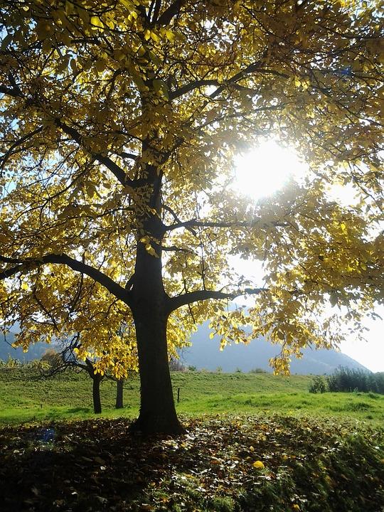 Autumn, Tree, Fall Color