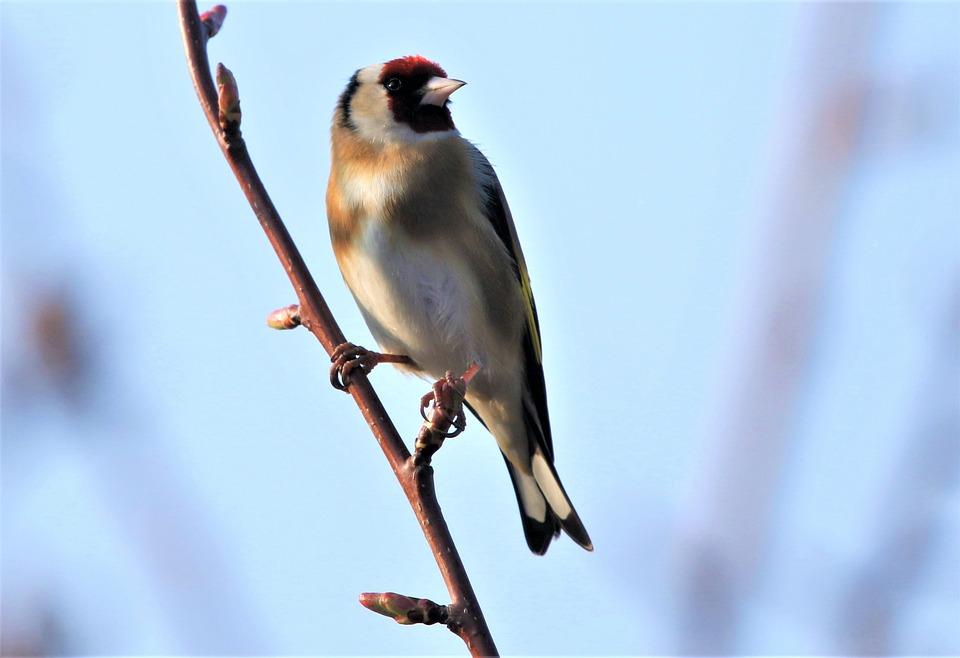 Bird, Goldfinch, Colourful, Nature, Autumn, Tree