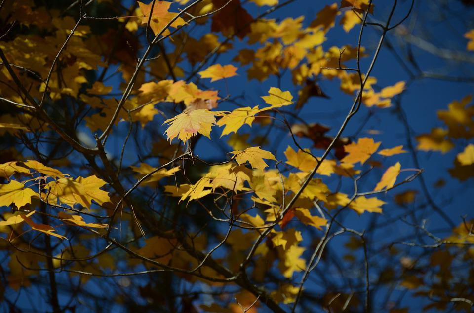Autumn, Tree, Leaves, Landscape, Fall, Forest, Colorful