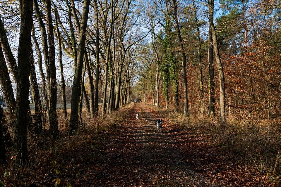 Autumn, Nature, Landscape, Mood, Tree, Idyllic, Forest