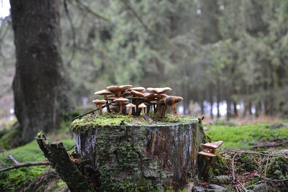 Mushrooms, Forest Mushrooms, Forest Floor, Autumn, Tree