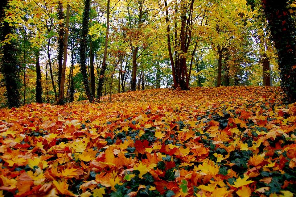 Autumn, Leaf, Season, Tree, Nature, Altentreptow