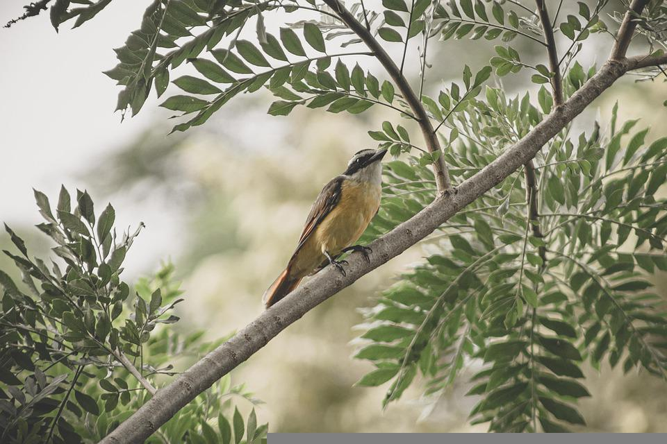 Bird, Tree, Perched, Avian, Wildlife, Nature
