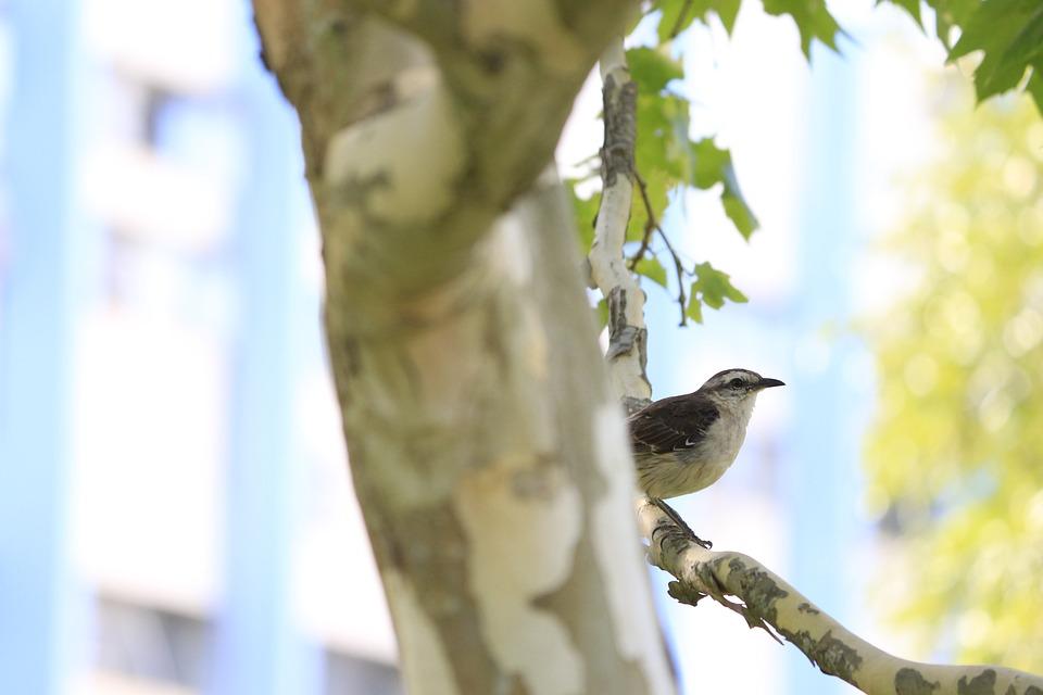 Bird, Avian, Tree, Nature, Wildlife