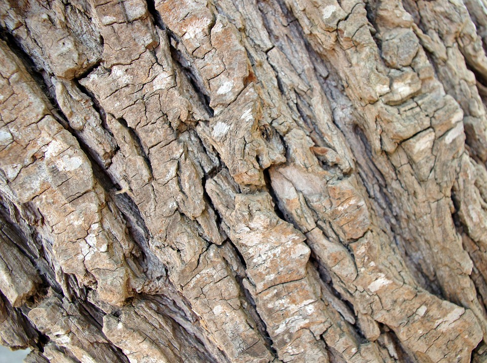 Background, Texture, Rough, Tree, Bark, Design, Web