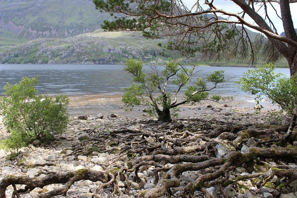Loch Ness, Tree, Root, Bank, Stable