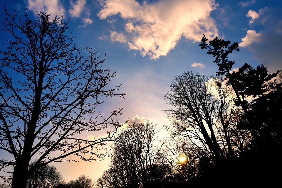 Tree, Tree Top, Branch, Bare Branch, Bare Tree