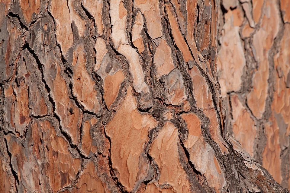 Bark Tree Pine Tribe Fund Background Brown