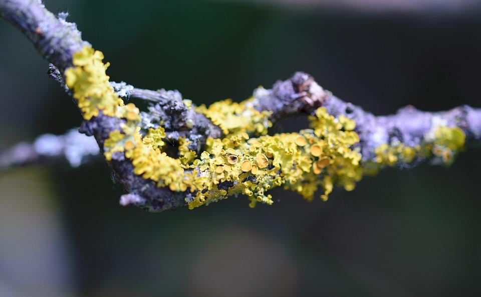 Closeup, Tree, Lichen, Bark, Natural, Park, Spring
