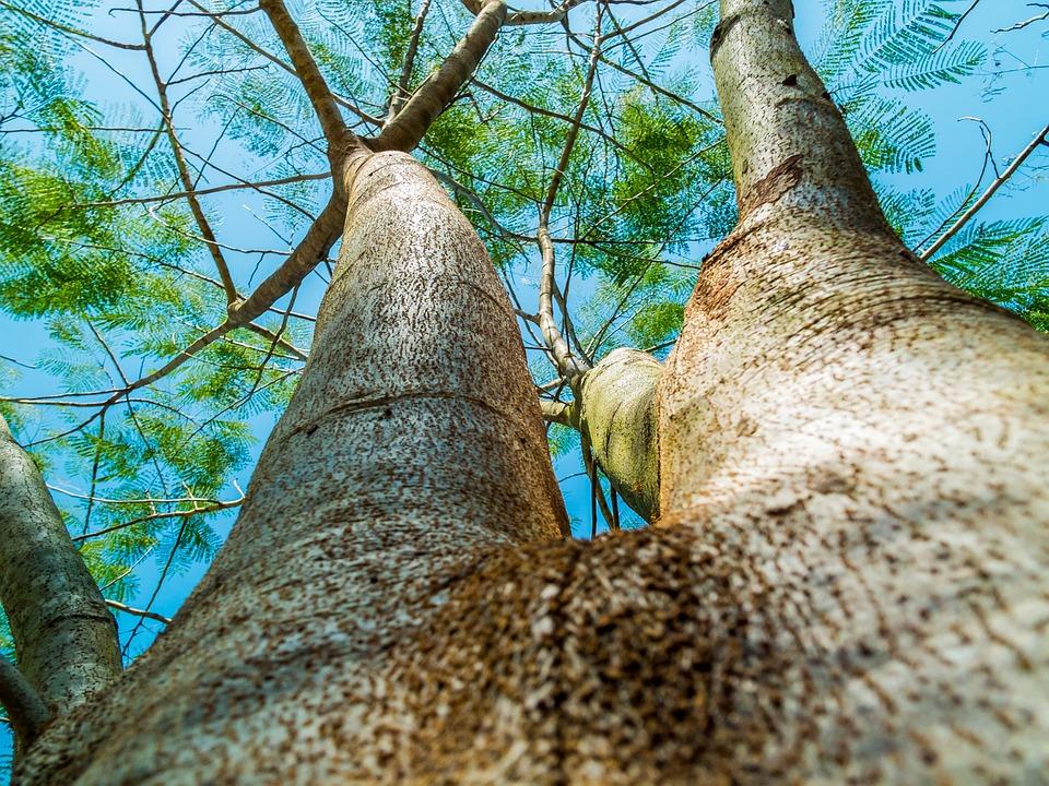 Log, Tree, Bark, Aesthetic