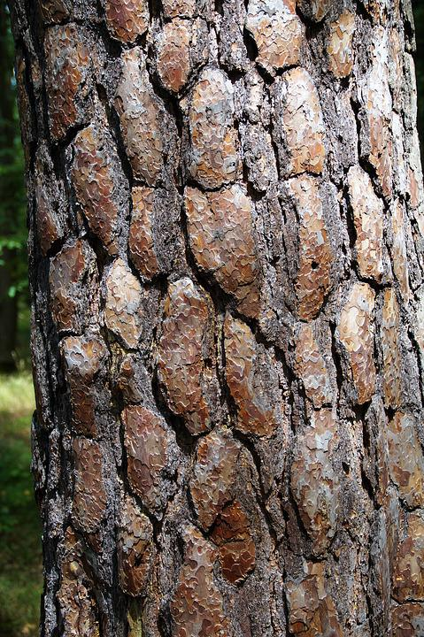 The Bark Of The Tree, Strain, Bark, Tree Bark
