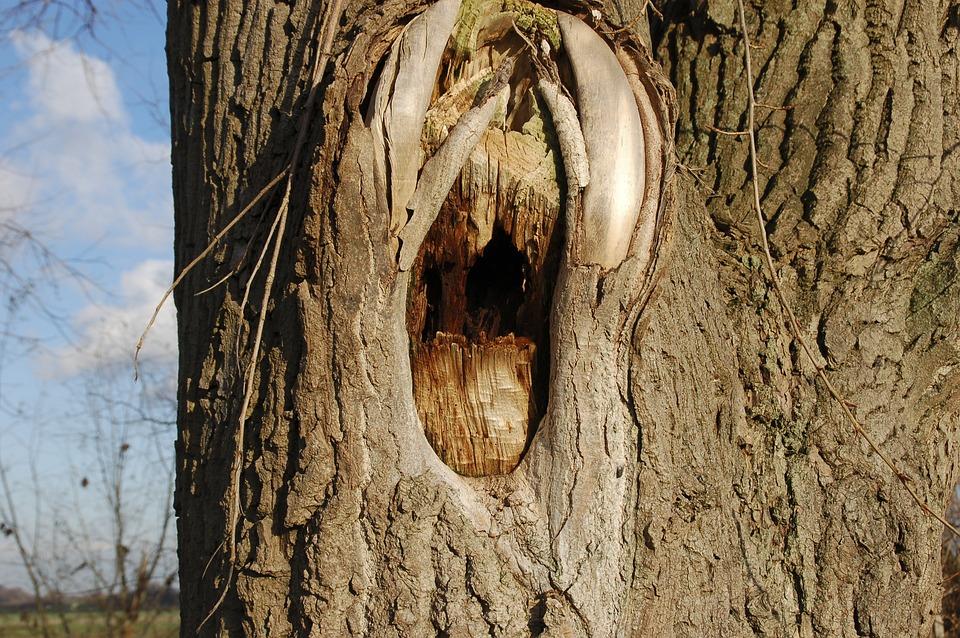 Tree Trunk, Bark, Tree, Tree Bark, Damage
