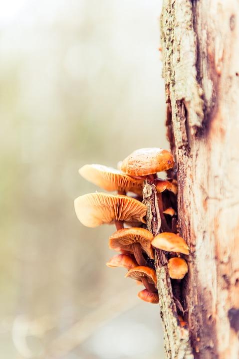 Tree, Tribe, Bark, Mushrooms, Log, Wood, Tree Bark