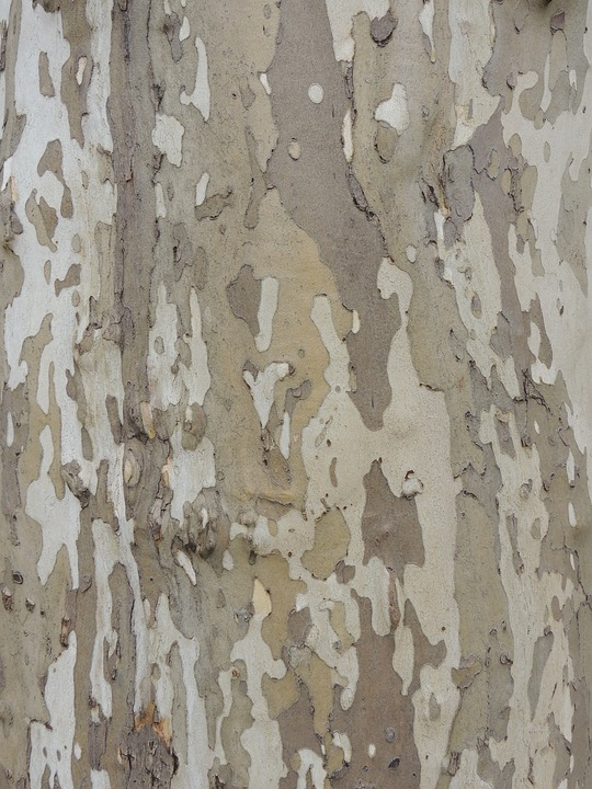 Bark, Camouflage, Tree, Nature, Trunk, Texture