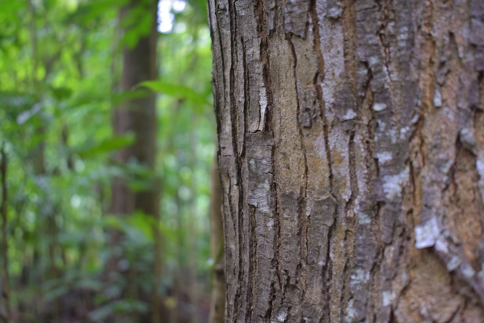 Bark, Wood, Tree, Nature, Abstract, Forest, Texture