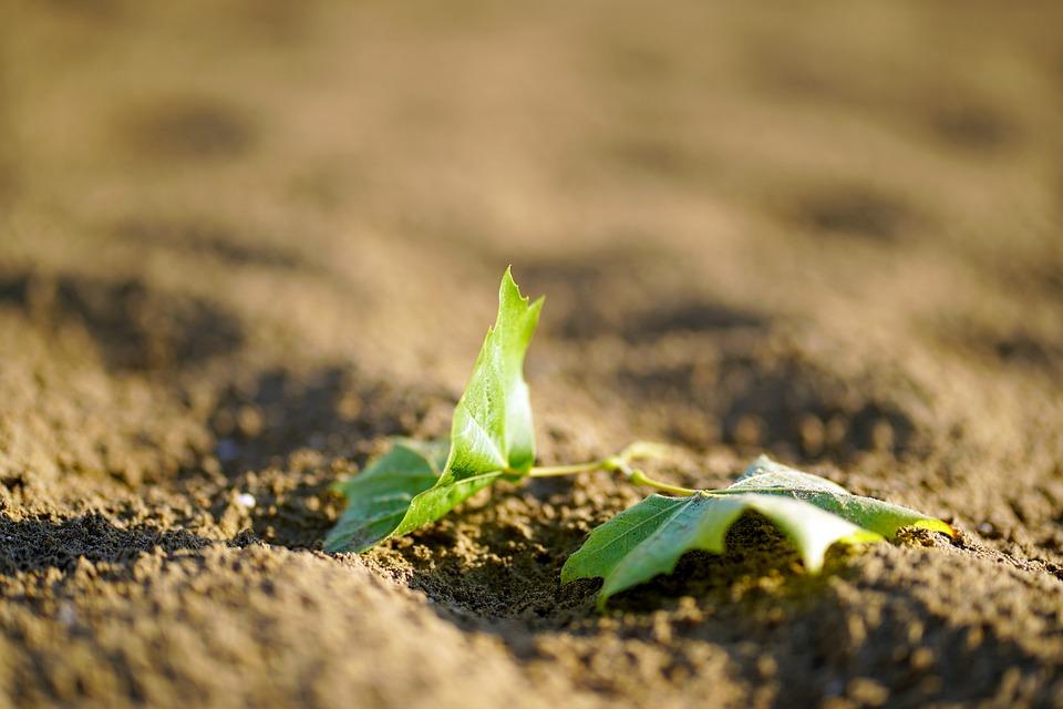 Leaf, Sand, Beach, Summer, Sea, Plant, Green, Tree