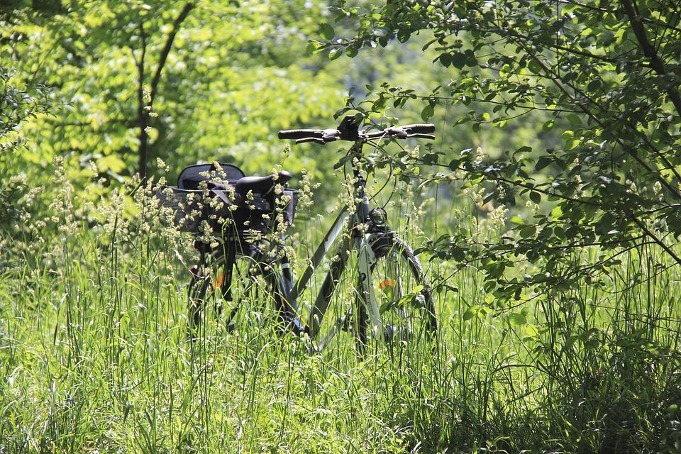 Nature, Wood, Tree, Landscape, Plant, Bike, Lady's Bike