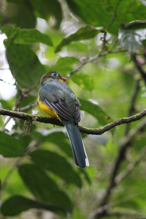 Bird, Branch, Tree, Beak, Feathers, Plumage, Avian