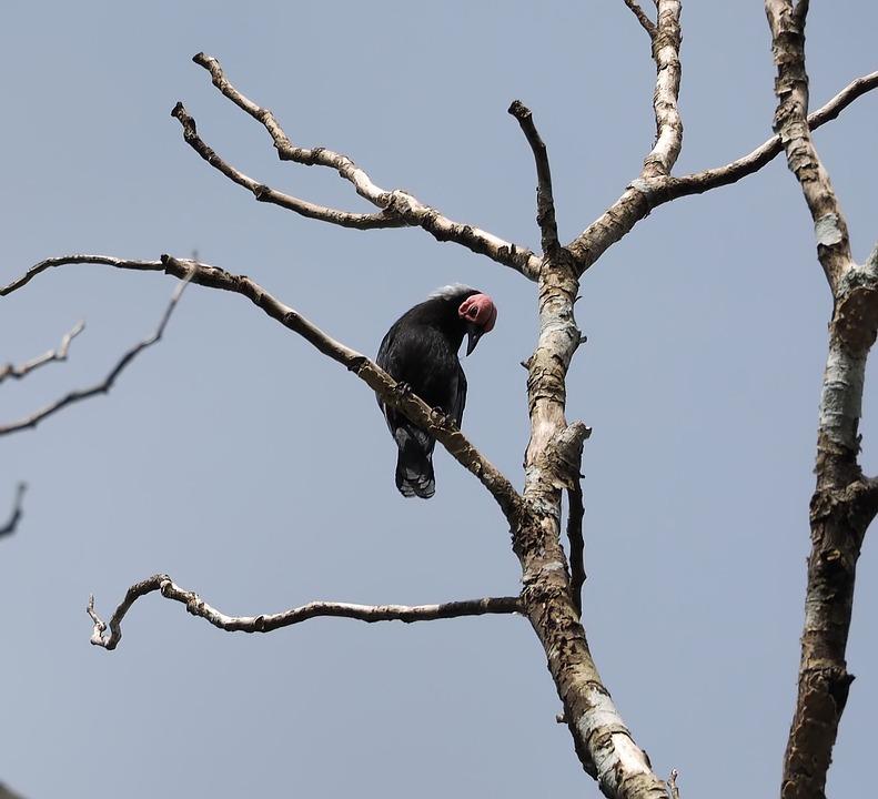 Bird, Wildlife, Tree, Nature, Animal, Outdoors, Avian