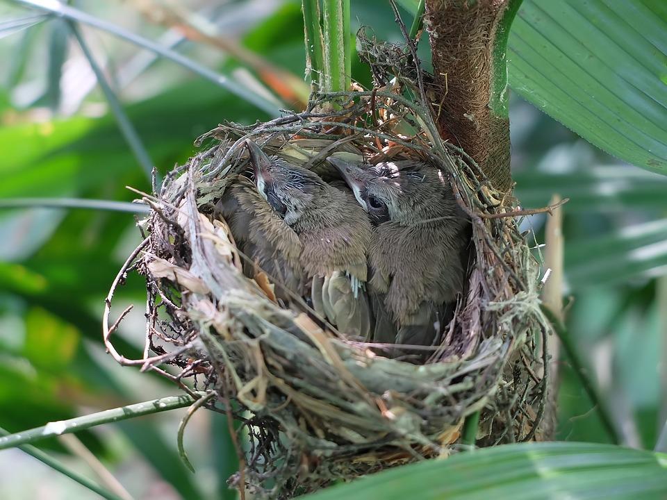 Nest, Bird, Nature, Tree, Food, Wildlife, Outdoors