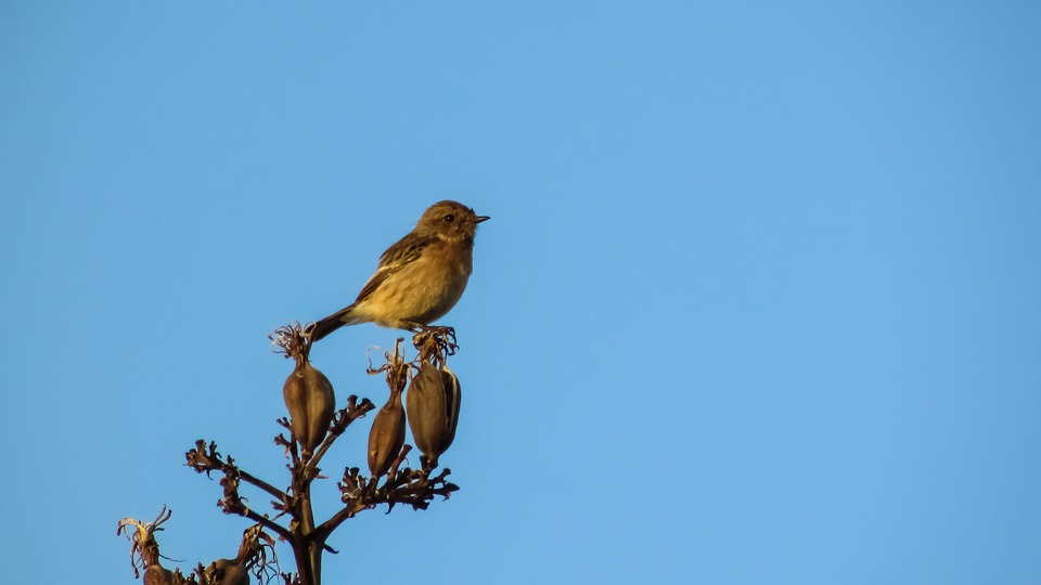 Robin, Sitting, Tree, Wildlife, Bird